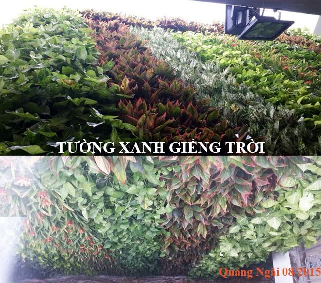 giai-phap-vuon-tuong-dung-minigarden-hu-vuc-gieng-troi-nha-anh-chung-quang-ngai-7