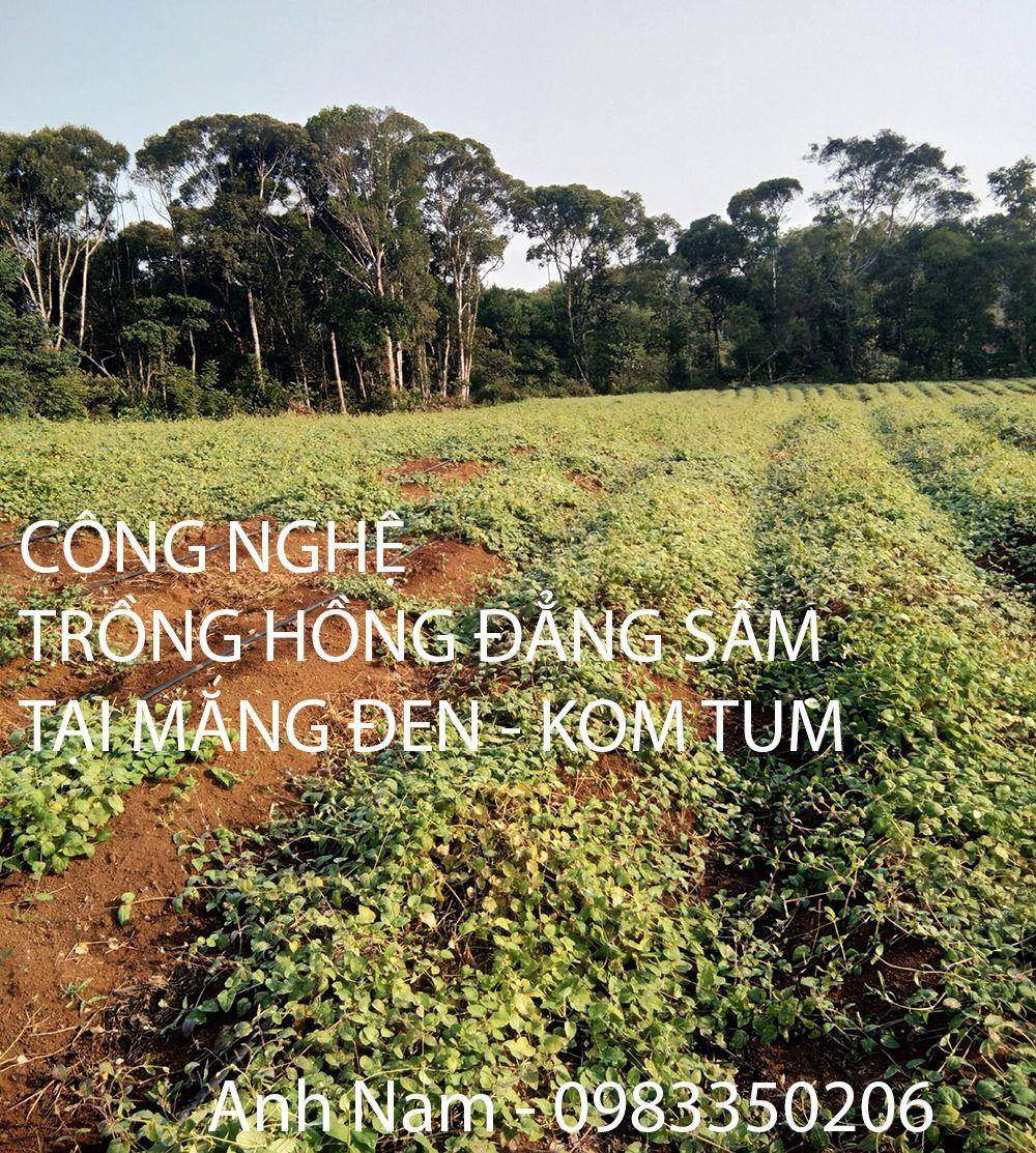 hong-dang-sam-mang-den Anh Nam - 0983350206
