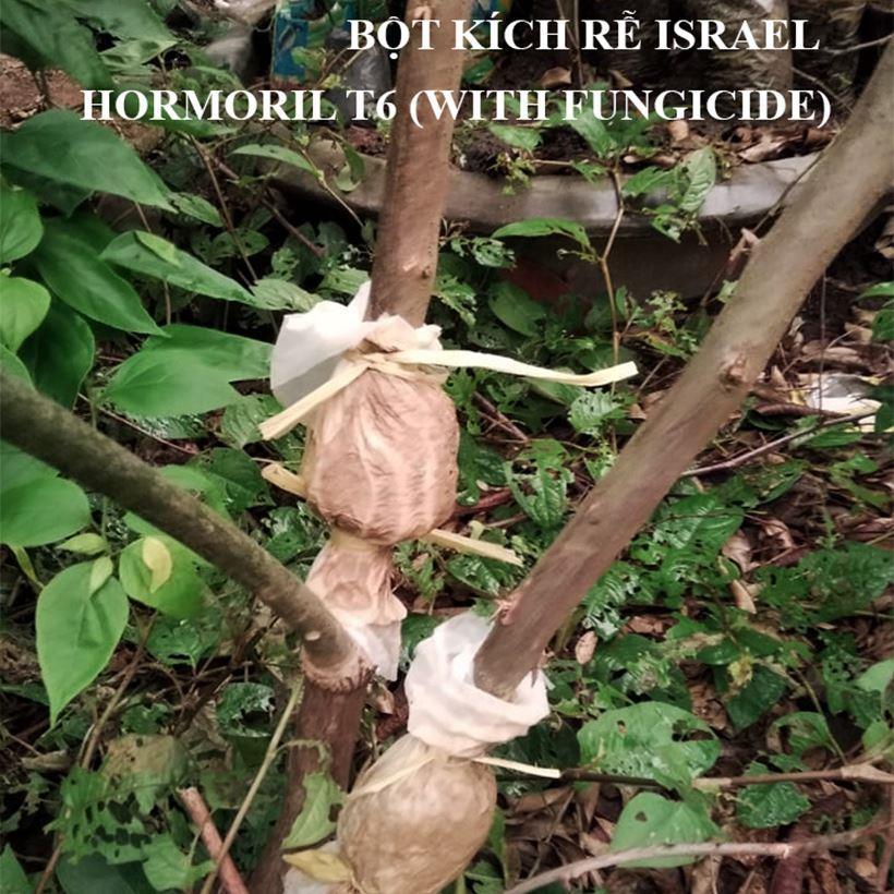 bot-kich-ra-re-israel (2)