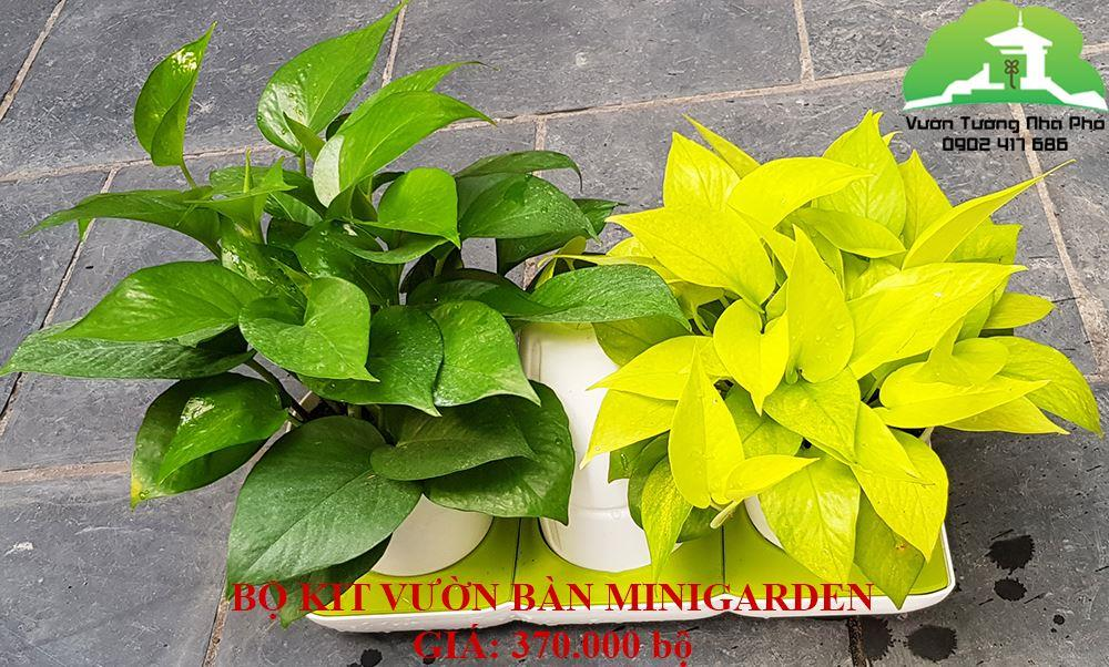 Bộ KIT trồng cây Thông Minh Tự động tưới Basic S bảo hành 10 năm