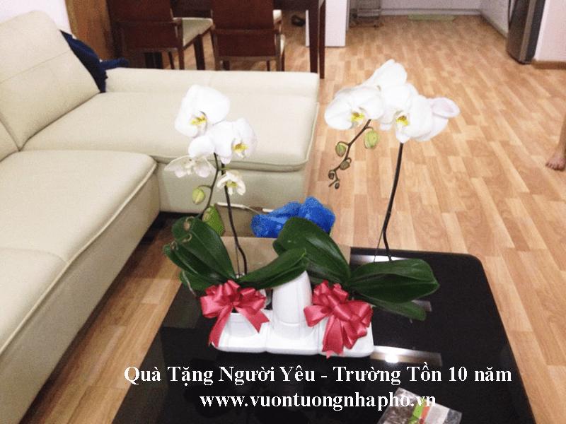 kit-trong-cay-tu-dong-tuoi-basic s  22